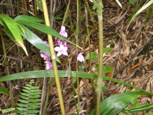 Orchids, fern, bamboo
