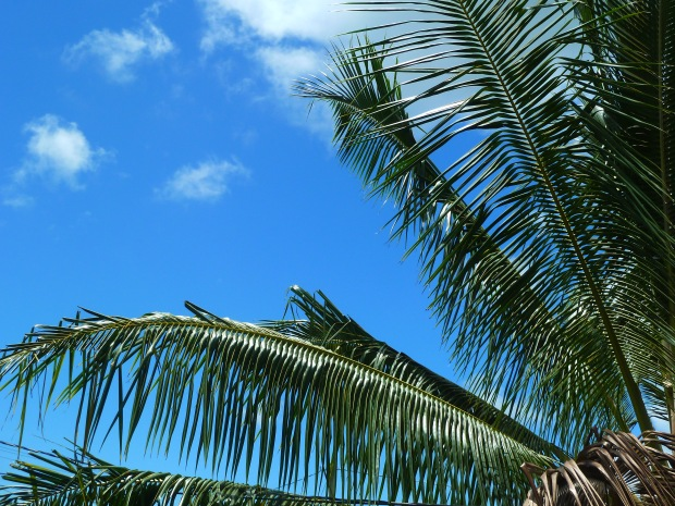 A perfect Kaua'i day: blue skies, low humidity, and the breeze rustling through the palm trees
