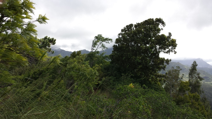 Namolokama Mountain, trees blown by 30 MPH wind gusts