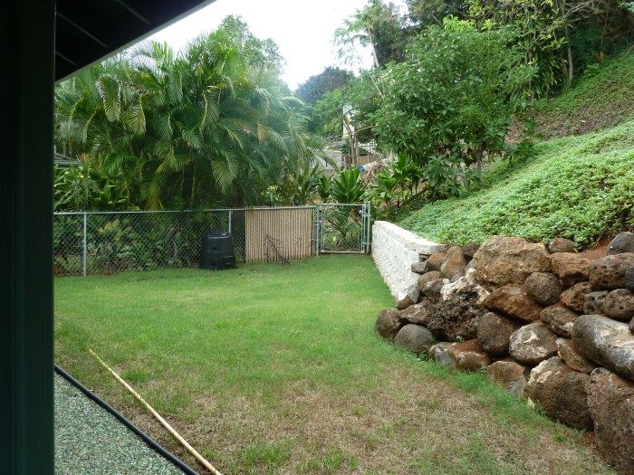 The back yard: We plan to put a vegetable garden in next spring. Up the hill are an avocado, guava and lemon tree.