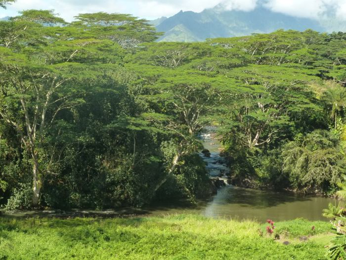 Another view of the Wailua River