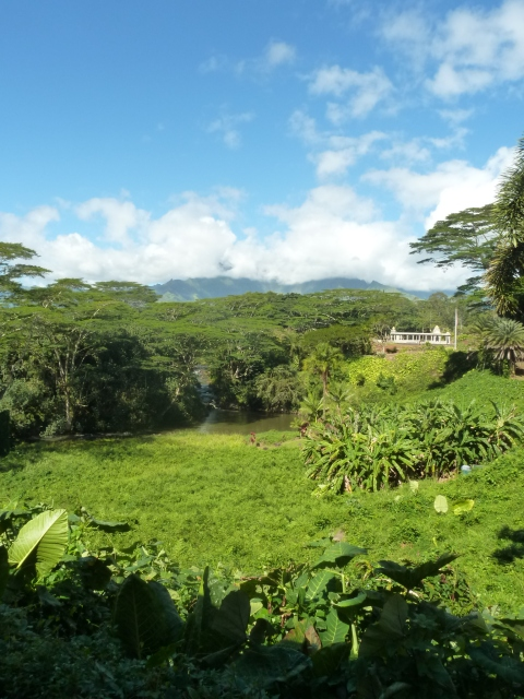 The view from the temple. It sits high on a ridge overlooking the north fork of the Wailua River.