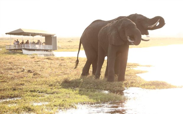 luxury-tented-safari-in-botswana-activities
