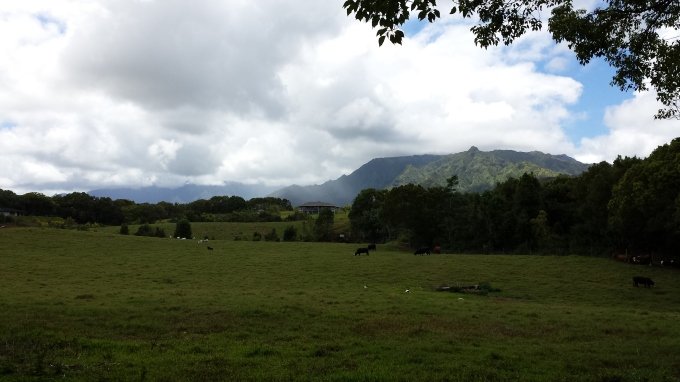 Green Pasture, and Rain in the Makaleha Mountains