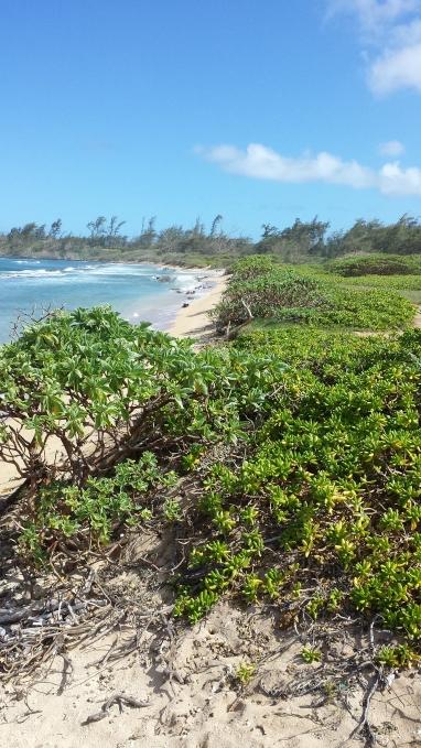 Farewell from Kaua'i Beach Resorts End of the Beach