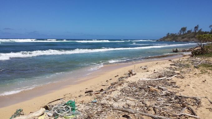 flotsam: fishing debris; driftwood