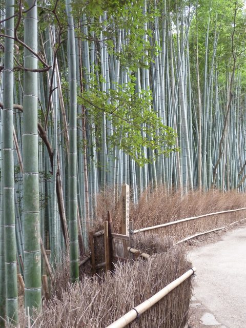 The bamboo path through the Sagano forest. The fence is made from dried bamboo branches.
