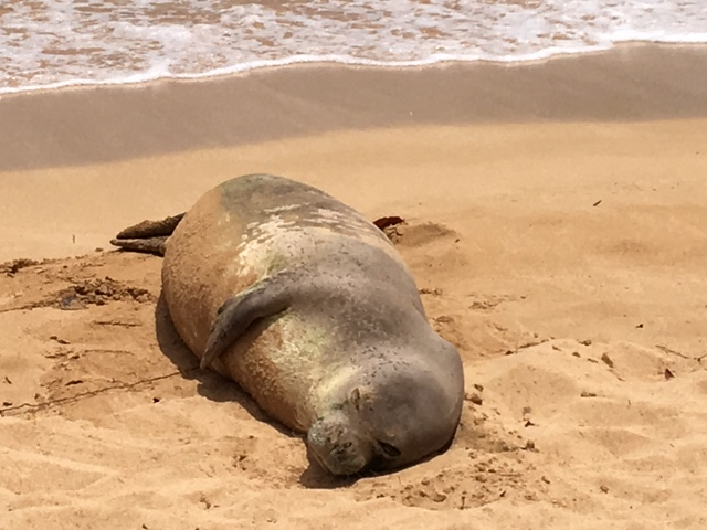 I know exactly how you feel, Mr. Monk Seal