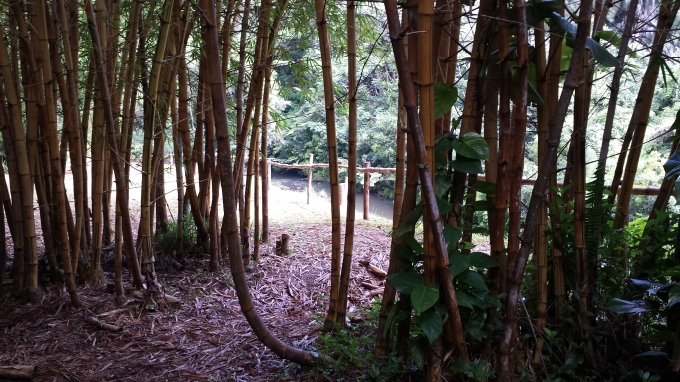 passage through bamboo