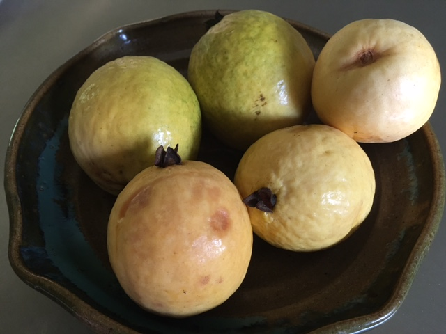 Guavas from our tree