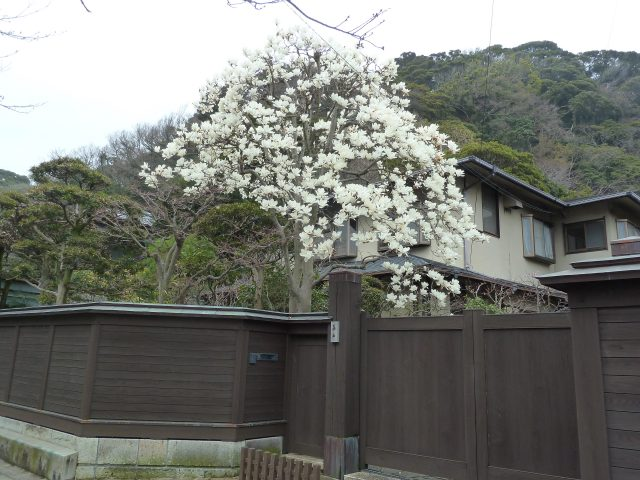 A walking tour through Kamakura will take through many beautiful residential areas.