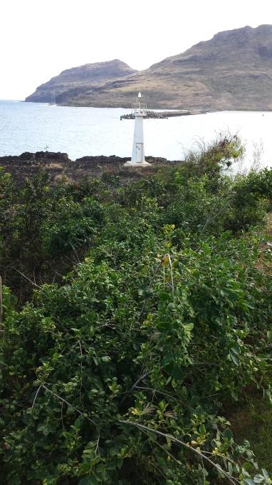 Little Light at Kukii Point