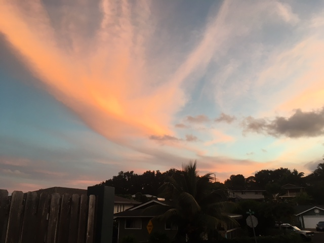 Wednesday's sunset view. Our house faces the southeast, so we don't often get such gorgeous views. It looks like a bird of paradise!