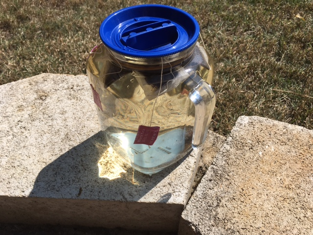 Making sun tea . . .