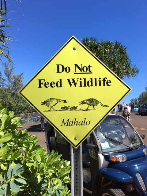 Do NOT Feed Wildlife, Mahalo