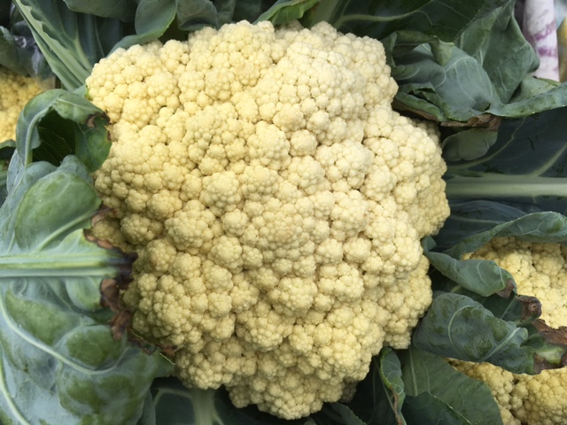 Even bigger heads of cauliflower