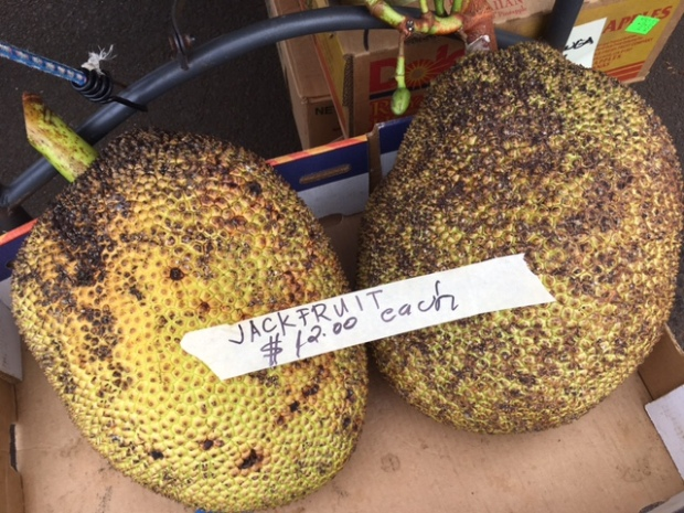 Sweet, tasty jackfruit - these babies are bigger than soccer balls