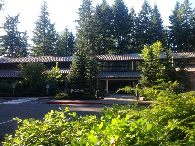 Big fir trees are everywhere in Portland
