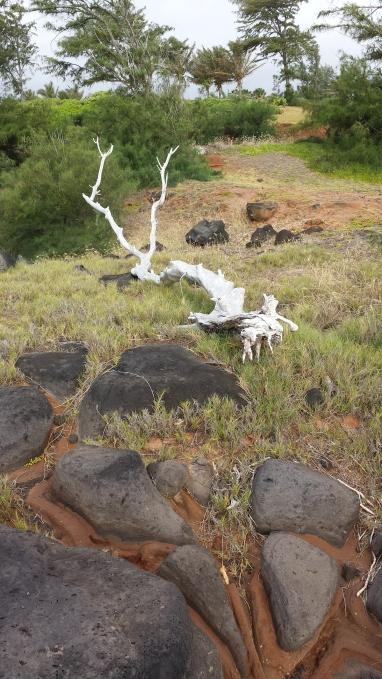 Whitenend Fallen Tree by the sea