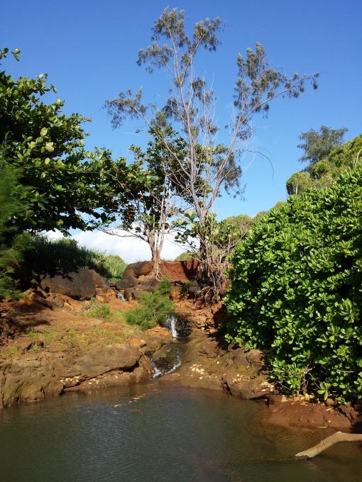 Waterfall, Kauai