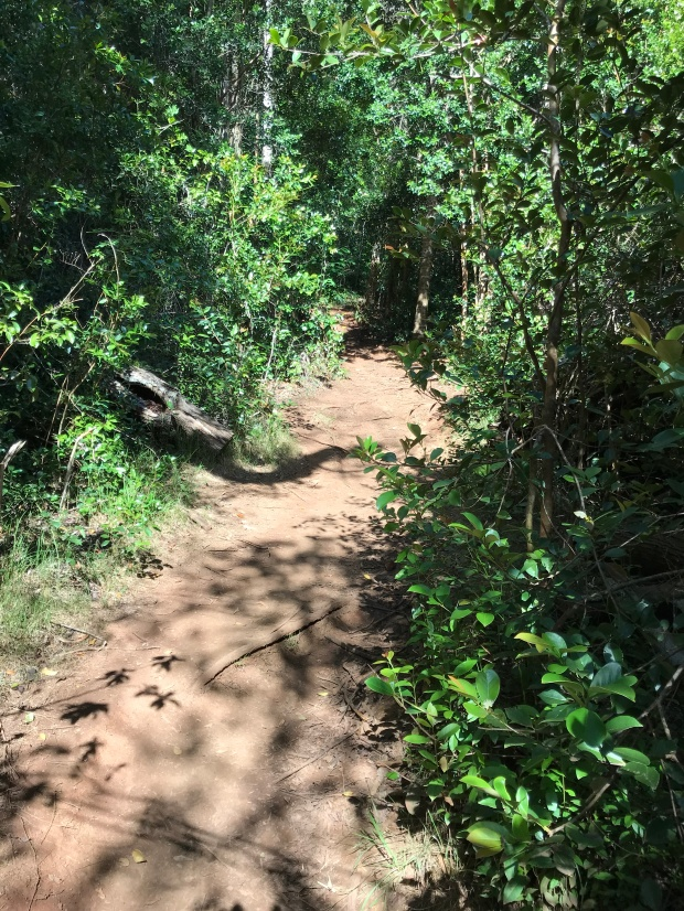 Trailhead of New Spur to Canyon Trail