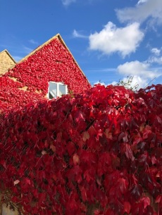 Before the storms arrived our cottage was covered in red leaves