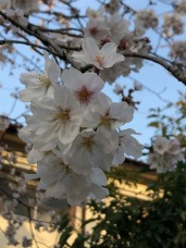 More blossoms . . .