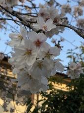 More blossoms . . .