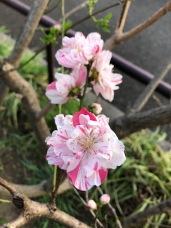 A new hybrid blossom.