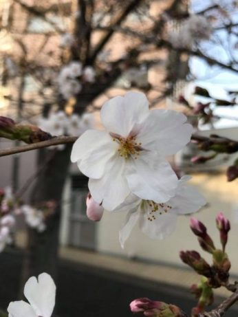 So happy we got to see the sakura before we left.