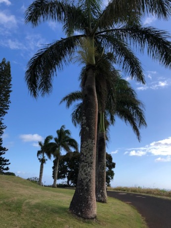 More mature palms