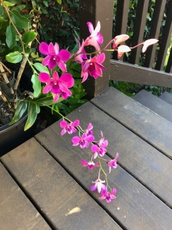 Orchids by our steps