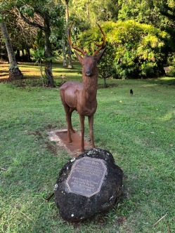The iron deer - this statue was commissioned by Queen Victoria, and brought to Kauai in 1956