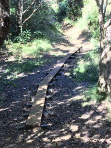 Plank pathway over intermittent stream