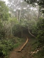 Misty trail through the jungle