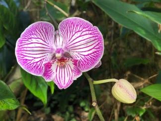 A hidden orchid