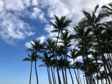 But there were blue skies and coconut palms by the car.